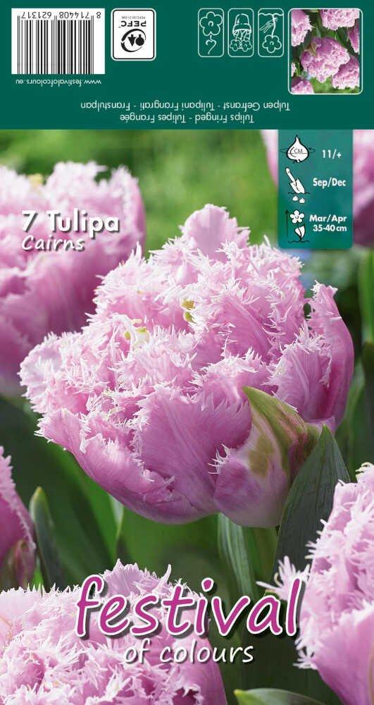 Tulipanløg - Cairns 11/+