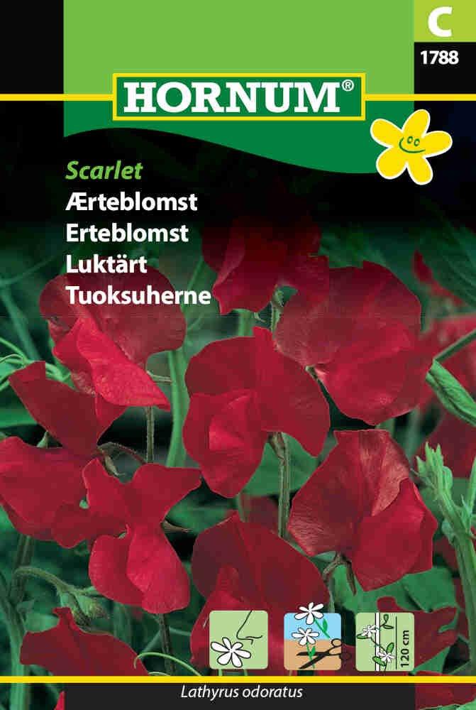 Ærteblomstfrø - Scarlet