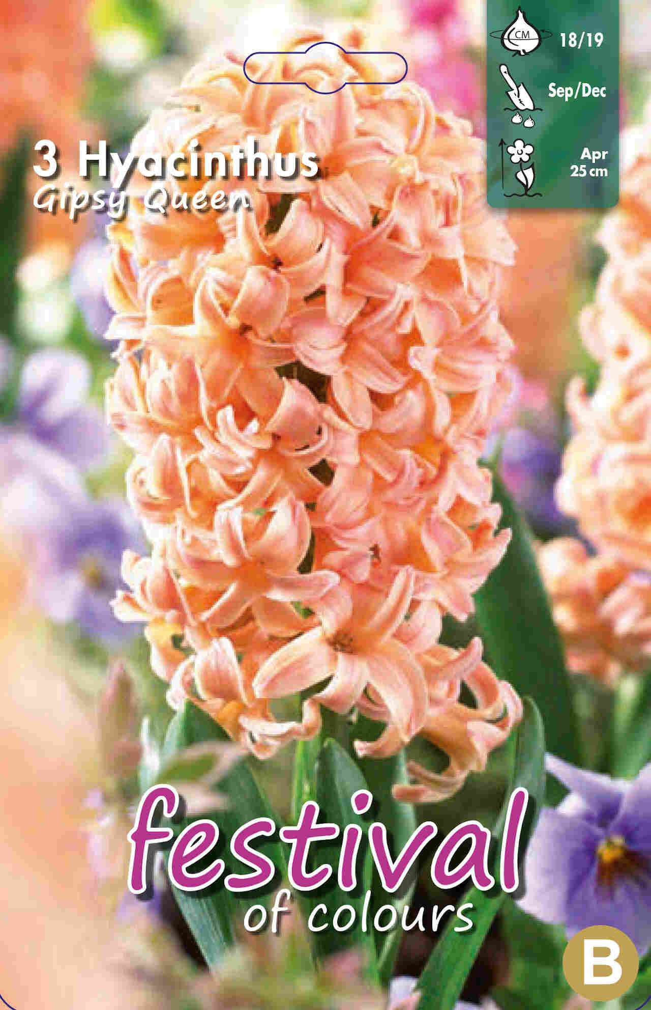 Hyacinths Gipsy Queen 18/19