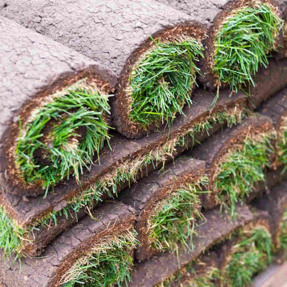 Rullegræs - til almindelig villa have