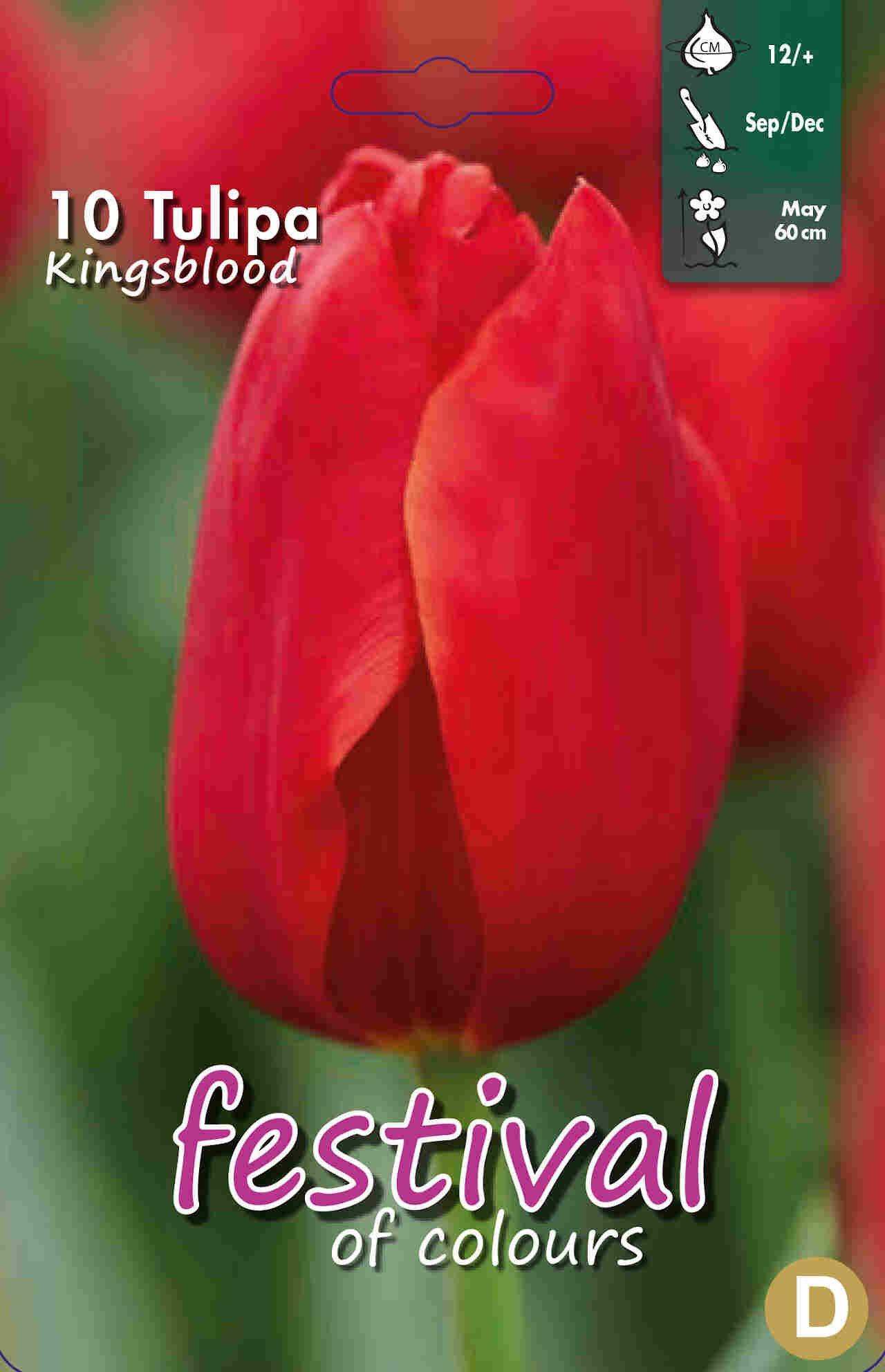 Tulipanløg - Tulipa Kingsblood 12/+