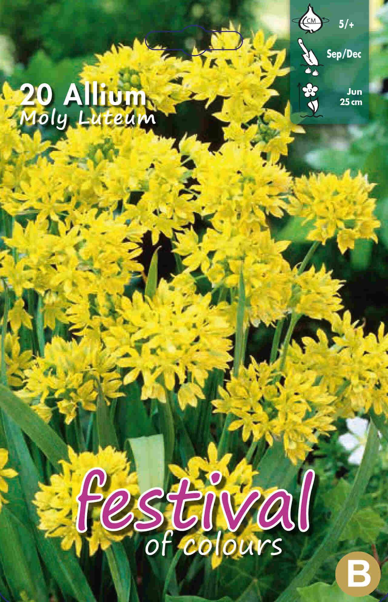 Prydløg - Allium Moly 5/+
