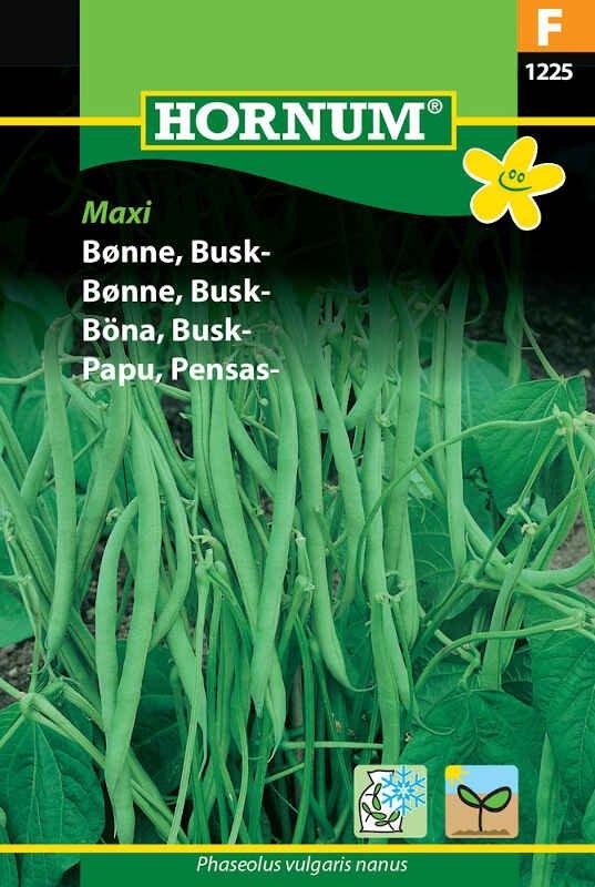 Buskbønne - Maxi