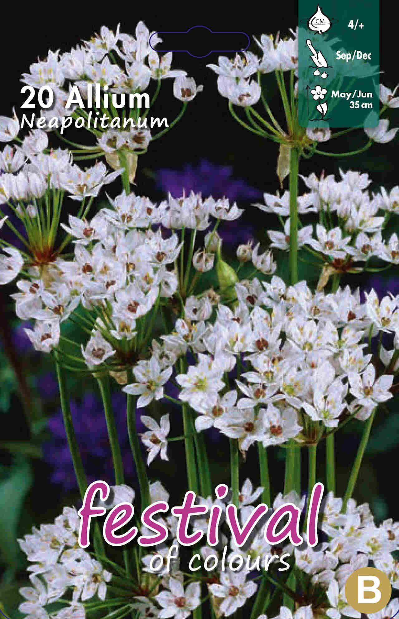 Prydløg - Allium Neapolitanum 4/+