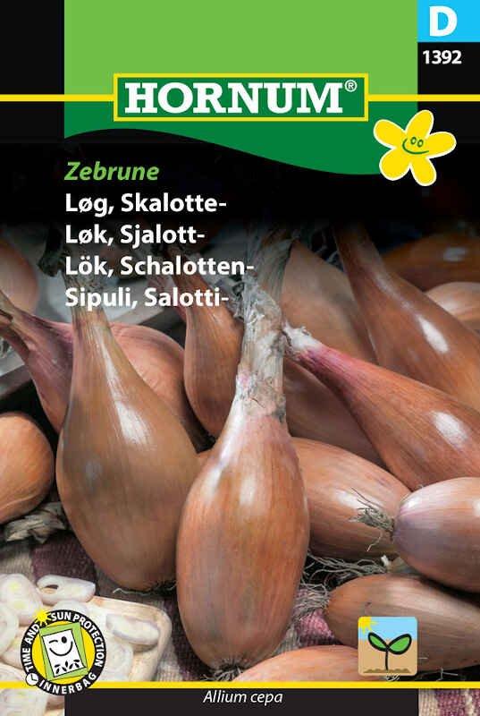 Løgfrø - Skalotte- Zebrune