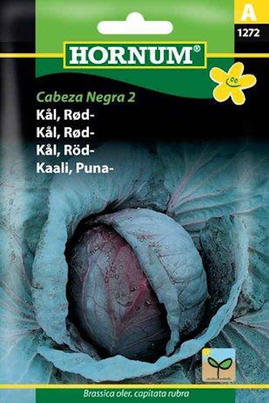 Kålfrø - Rødkål - Cabeza Negra 2