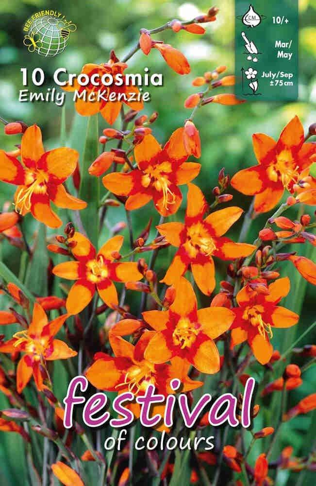 Montbretia - Crocosmia 'Emily Mckenzie'