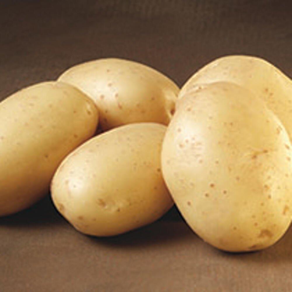 Læggekartofler - Hamlet