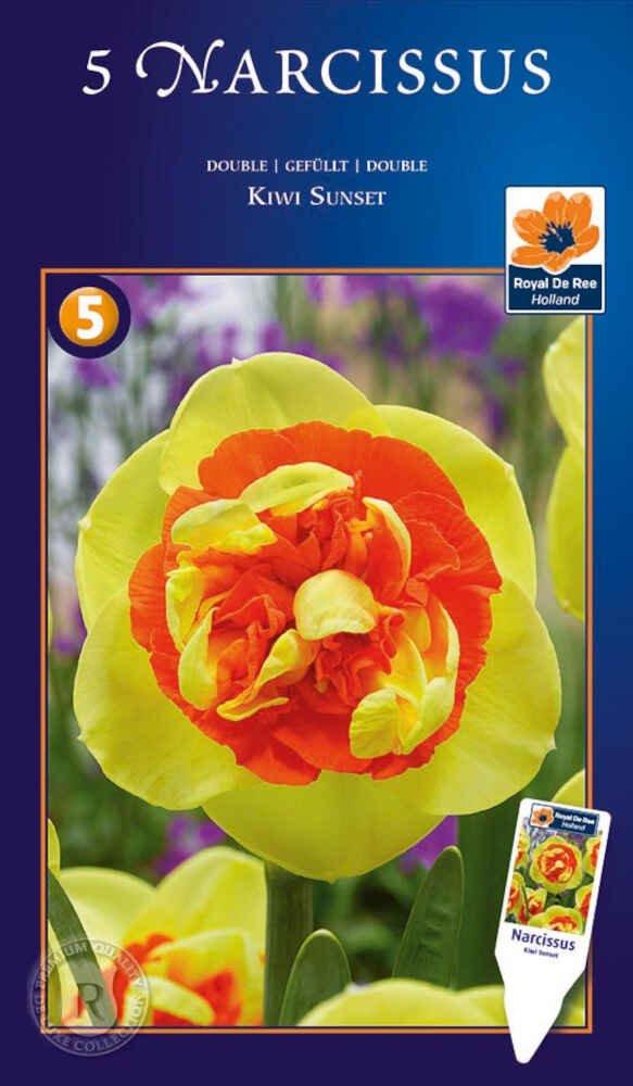 Påskeliljeløg - Narcissus Kiwi Sunset 12/14