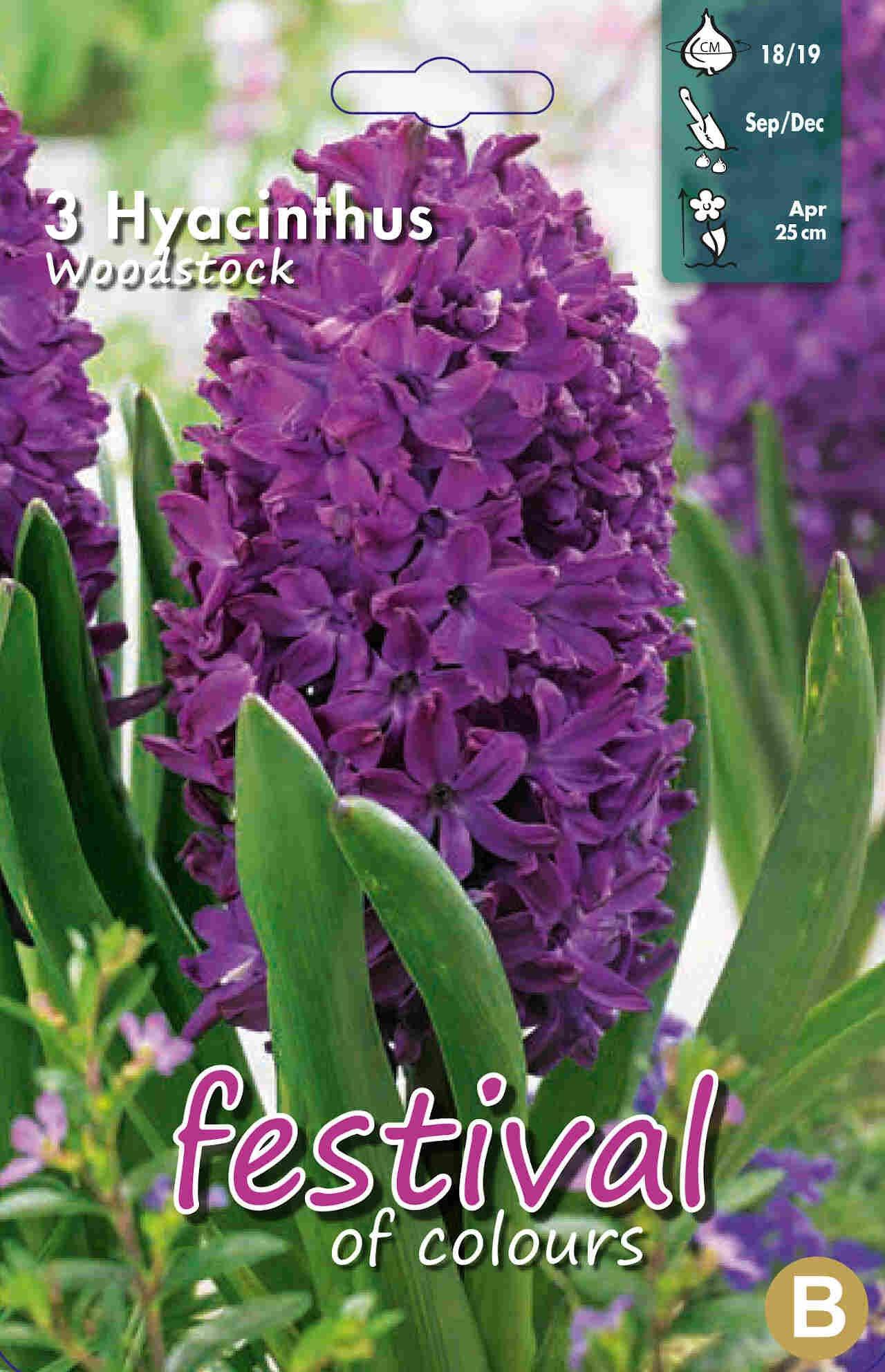 Hyacint - Hyacinths Woodstock 18/19