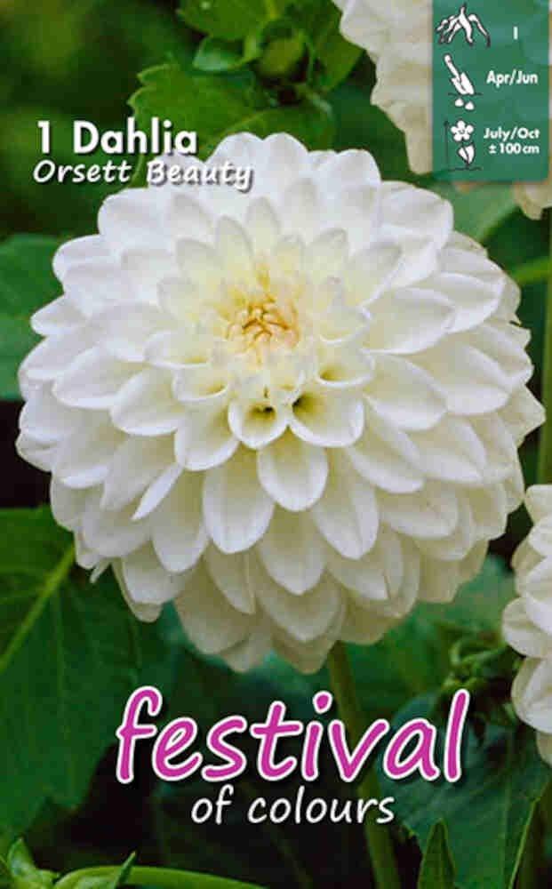 Dahlia Orsett Beauty Pompon