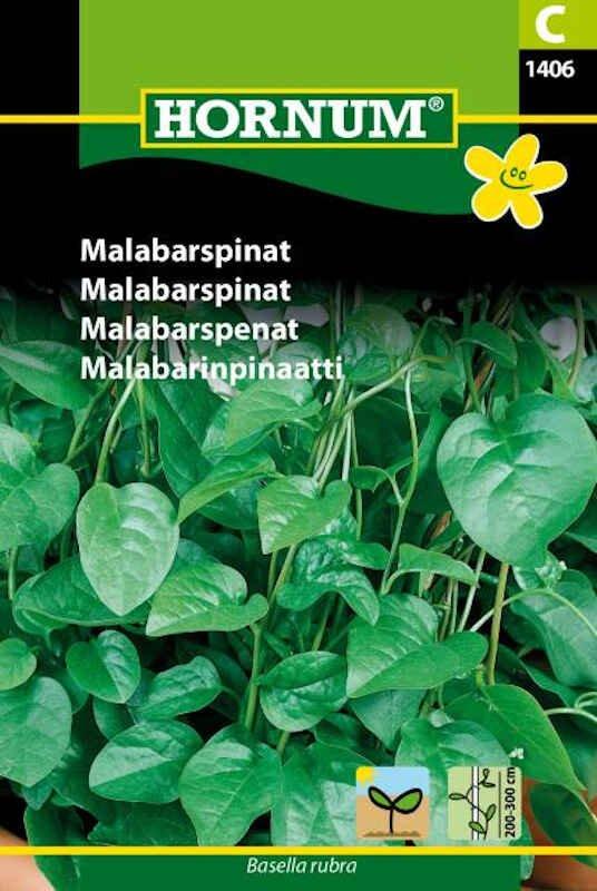 Malabarspinat frø