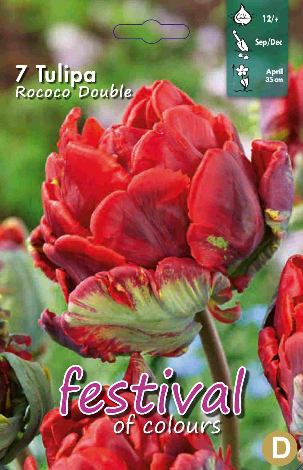 Tulipanløg - Tulipa Rococo Double 12/+