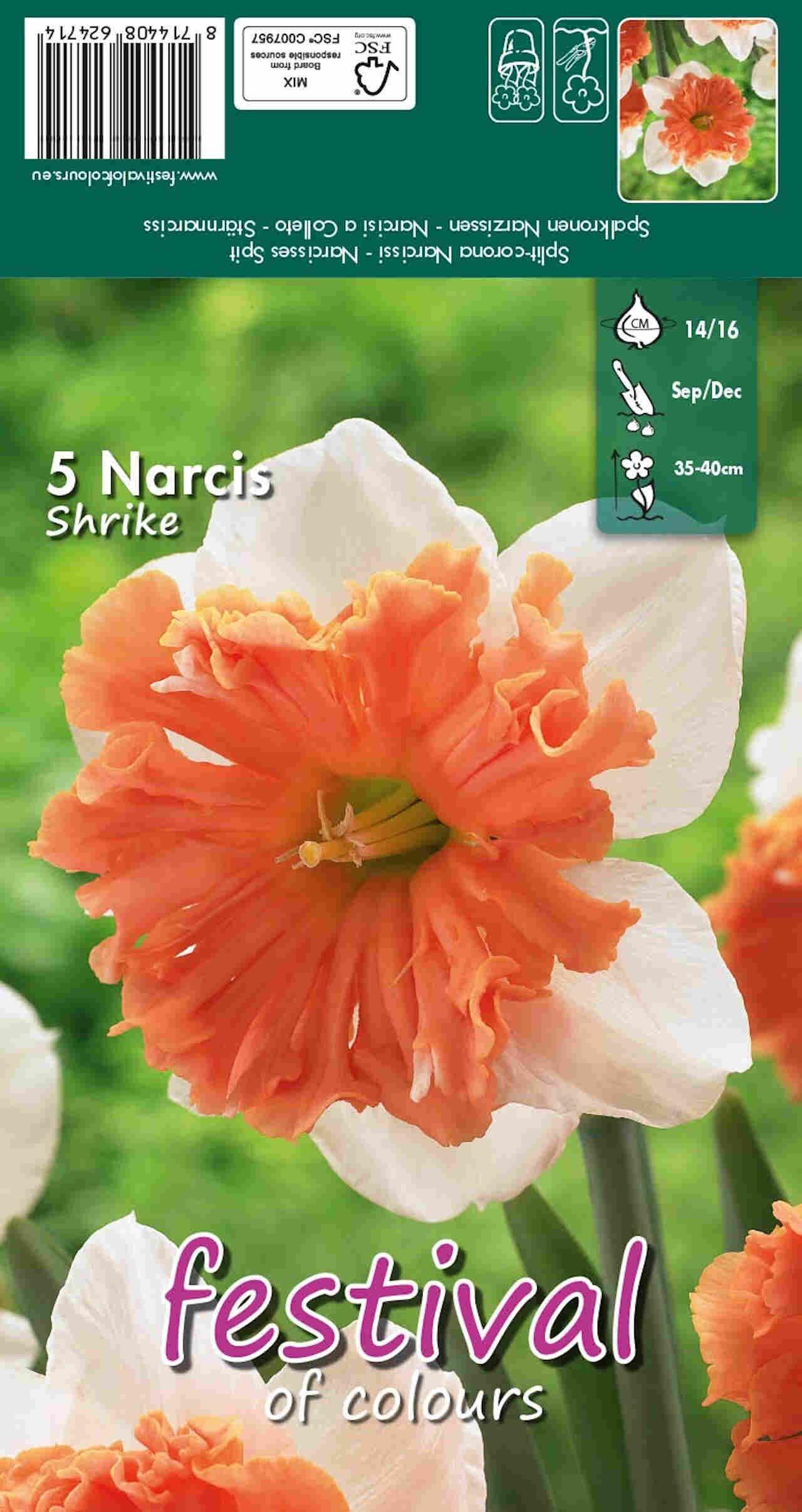 Påskeliljeløg - Narcissus Shrike 14/16