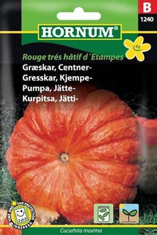Græskarfrø - Centner - Rouge trés hâtif
