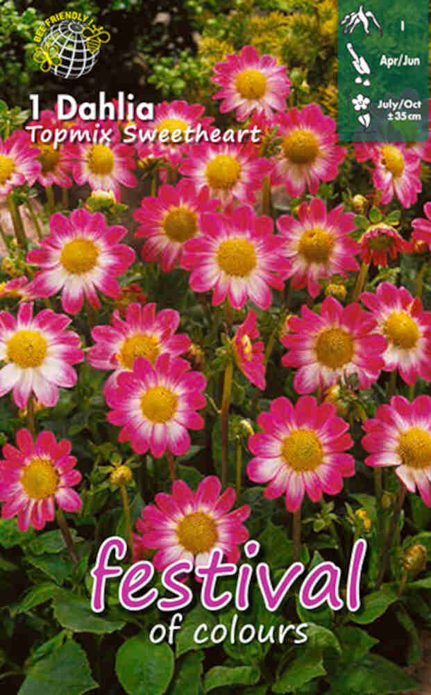 Dahlia Sweetheart Topmix