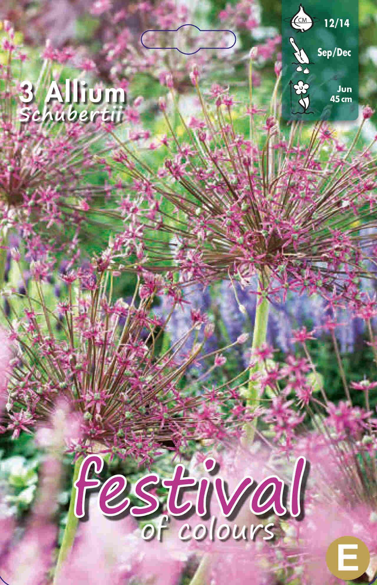 Prydløg - Allium Schubertii 12/14