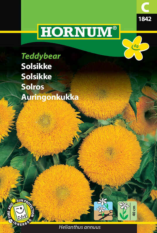 Solsikkefrø - Teddybear