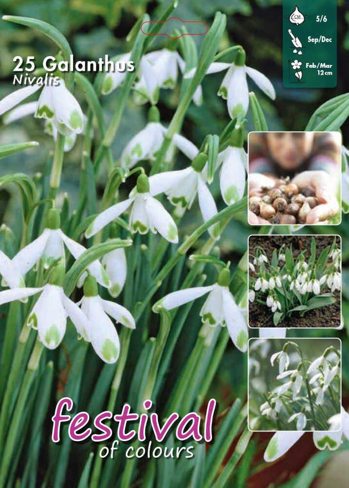 Vintergæk - Galanthus nivalis 5/6 - Big bag