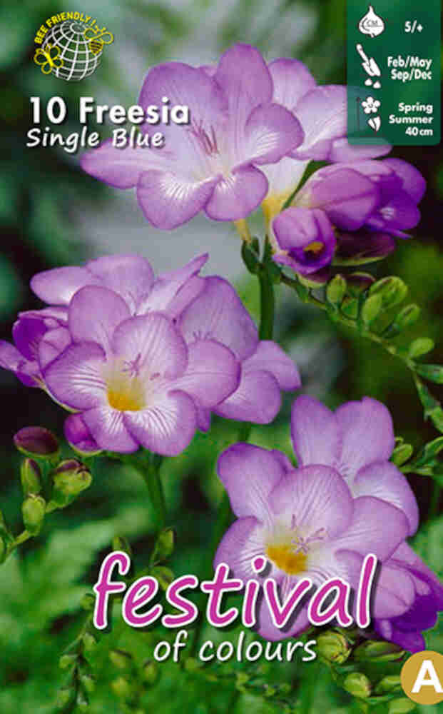 Fresia - Freesia 'Blue Single' 5/+
