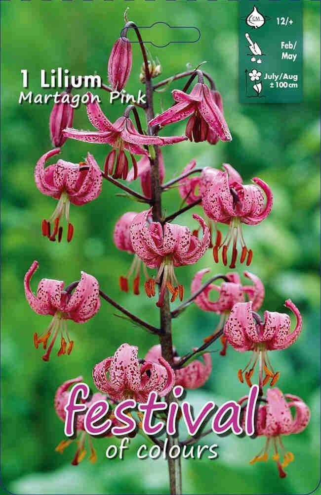 Kranslilje - Lilium 'Martagon Pink'
