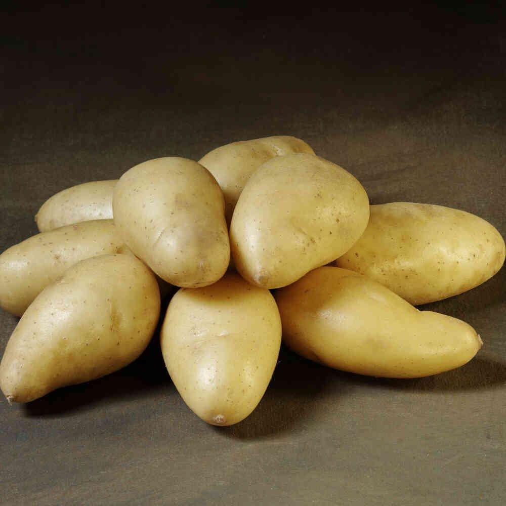 Exquisa læggekartofler er en moderne aspargeskartoffel