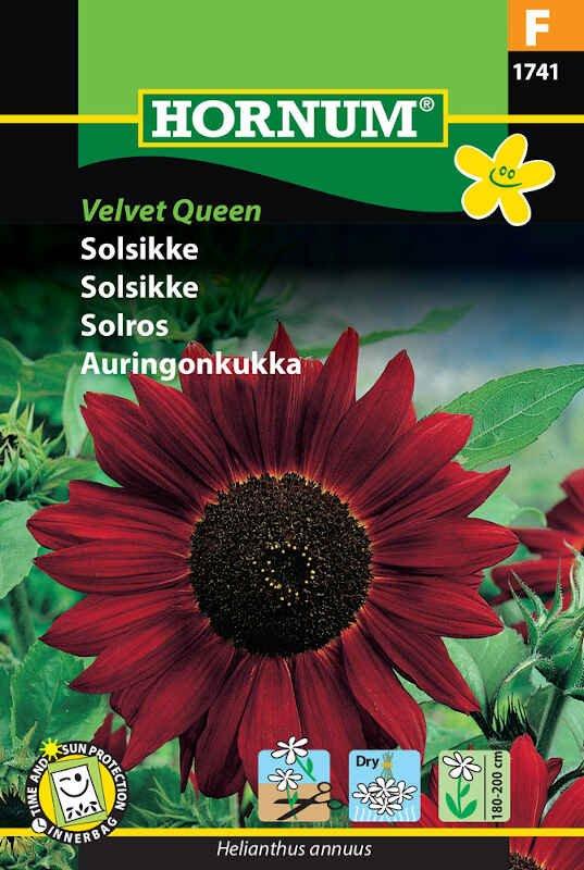 Solsikkefrø - Velvet Queen
