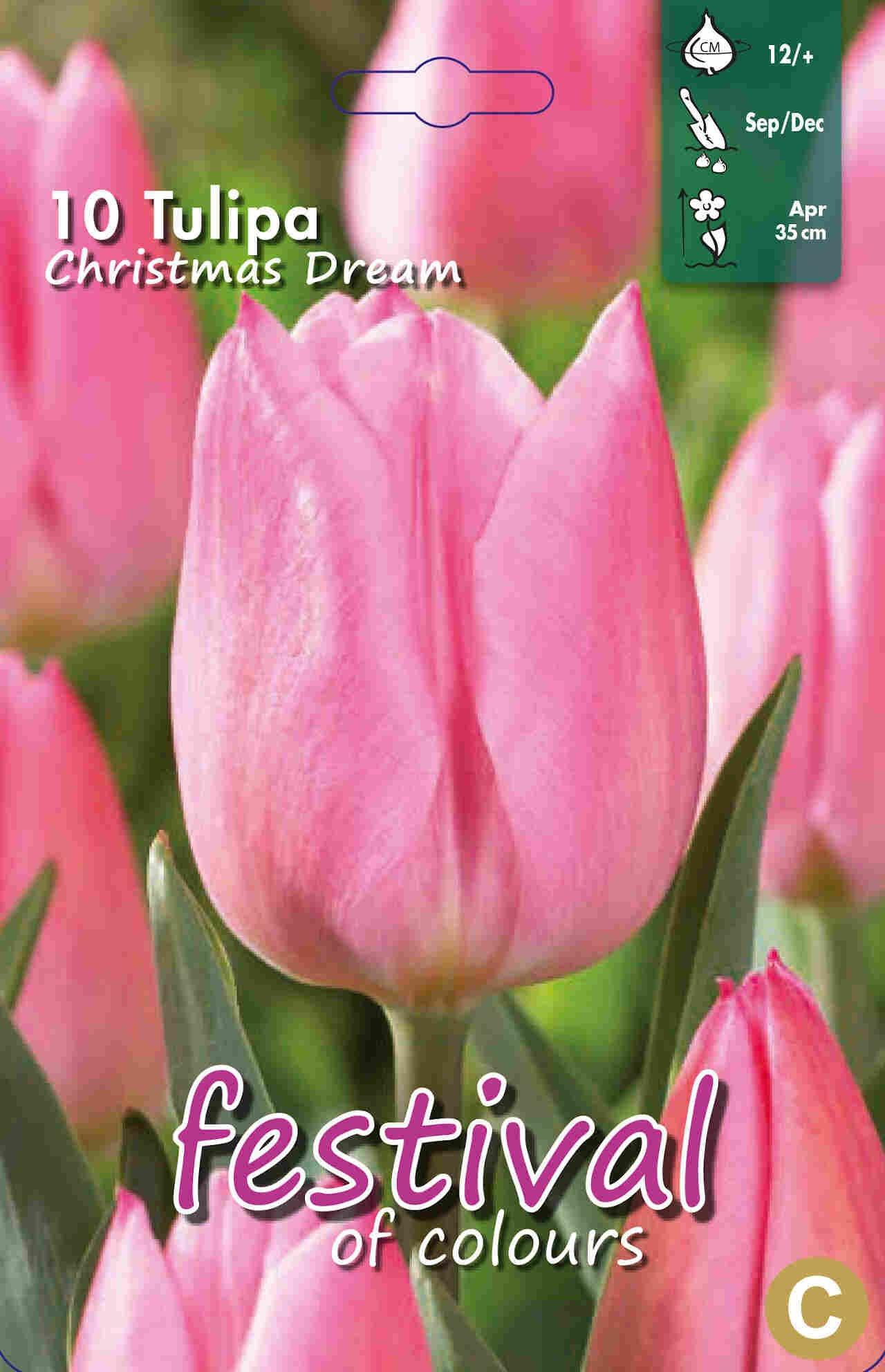 Tulipanløg - Tulipa Christmas Dream 12/+