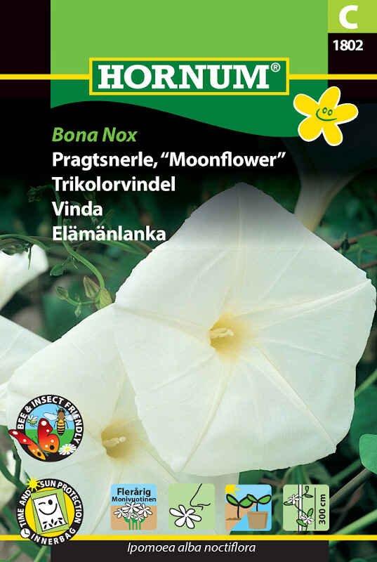 Pragtsnerle frø - Bona Nox