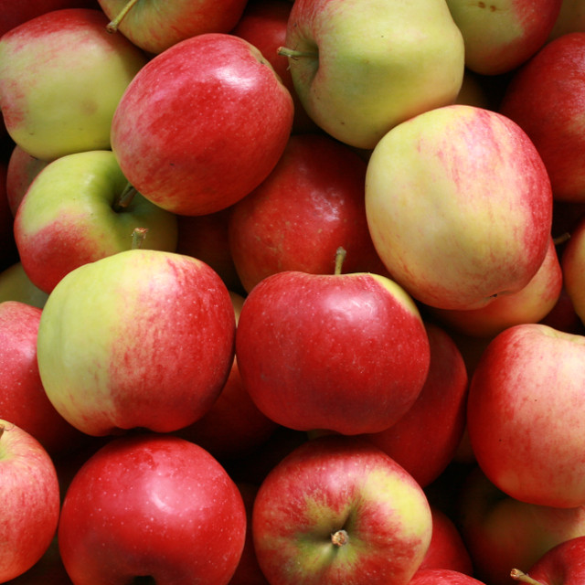 Æbletræ - Malus domestica 'Ahrista'