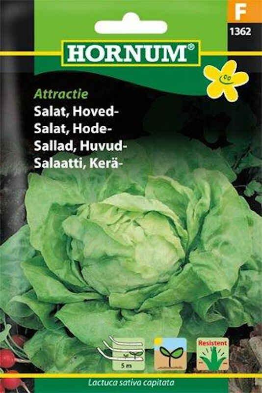 Salatfrø - Hoved - Attractice