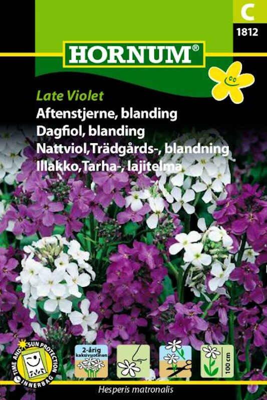 Aftenstjerne frø - blanding - Late Violet