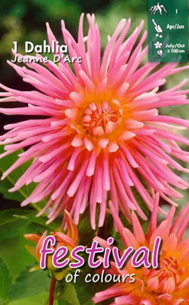 Dahlia Jeanne d'Arc (Semi)Cactus