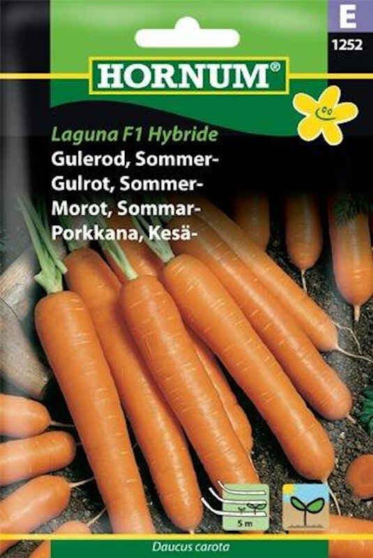 Gulerodsfrø - Sommergulerod - Laguna F1, Såbånd