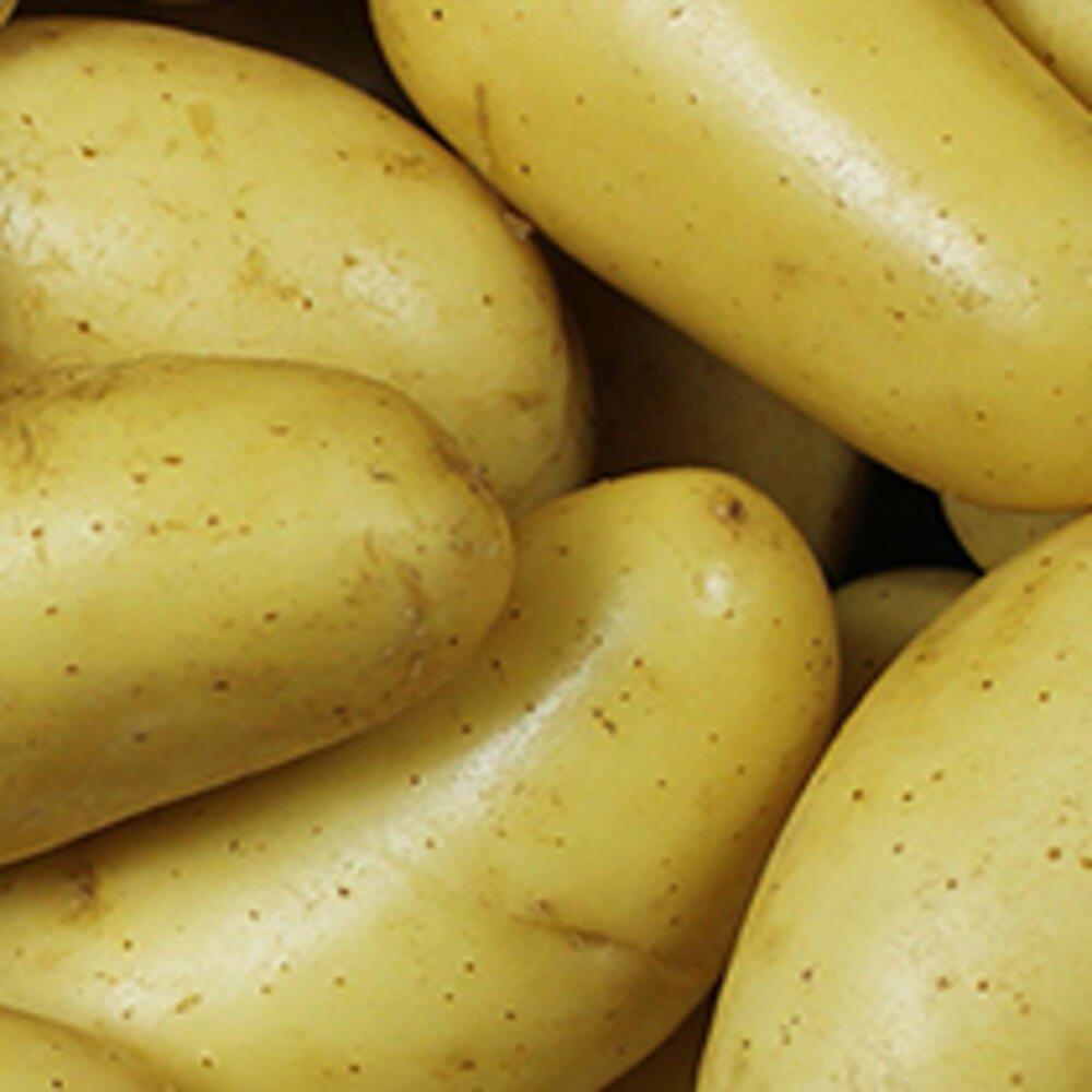Læggekartofler - Darling