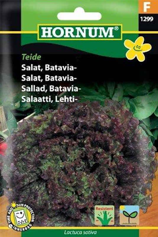 Salatfrø - Batavia - Teide