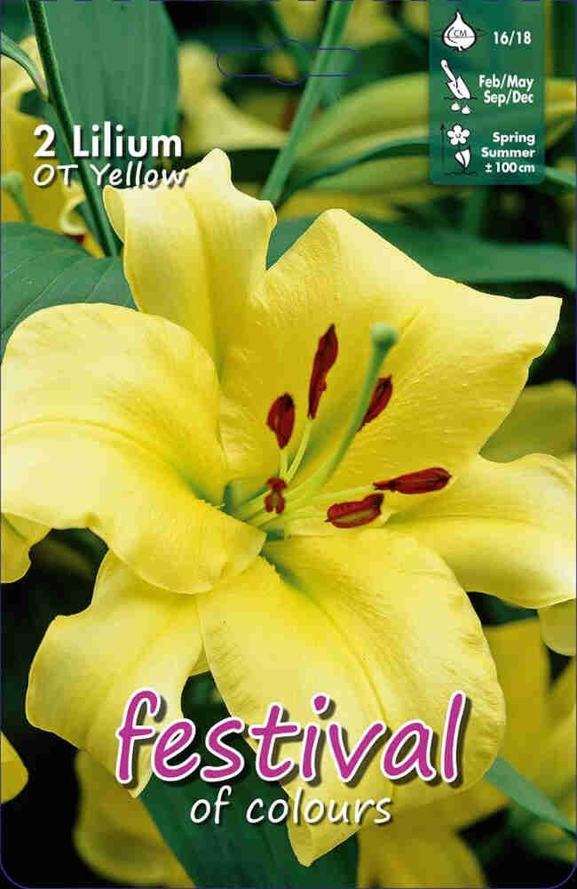 Orientalsk - Lilium OT Yellow (x2) 16/18