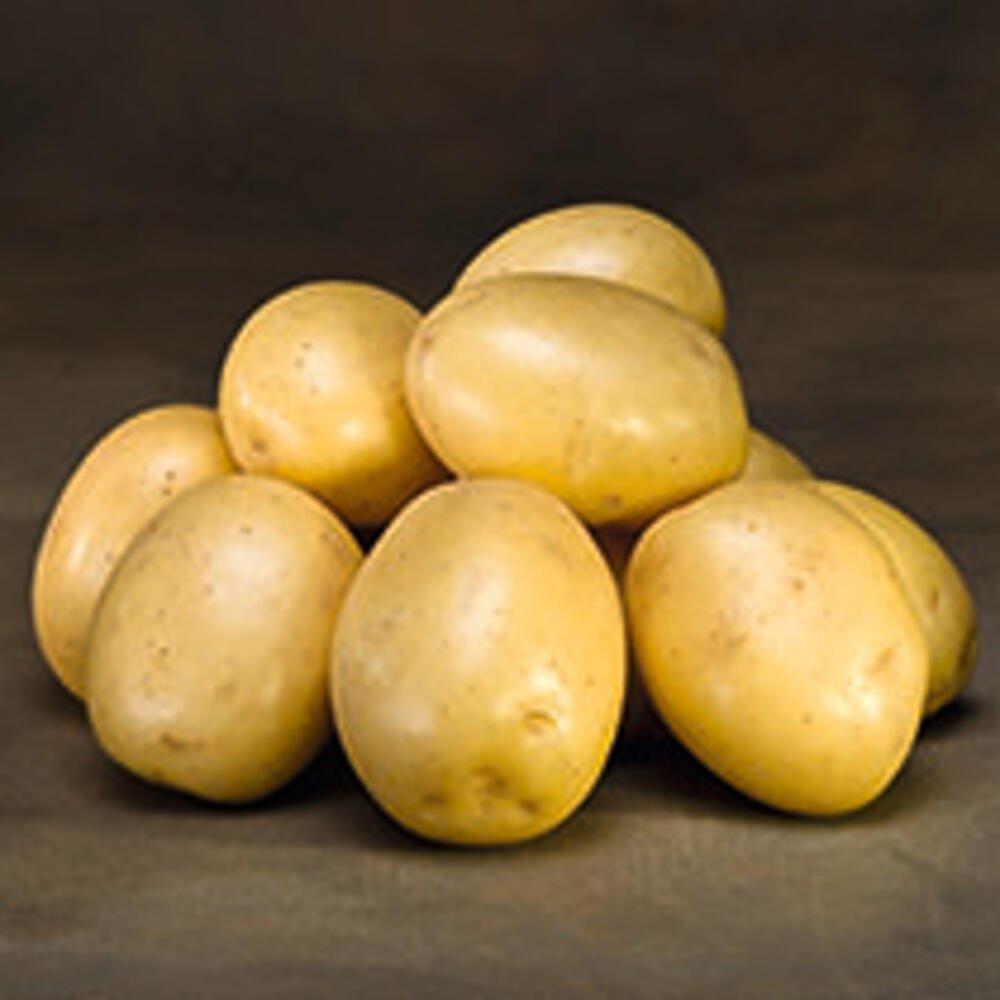 Læggekartofler - Gala