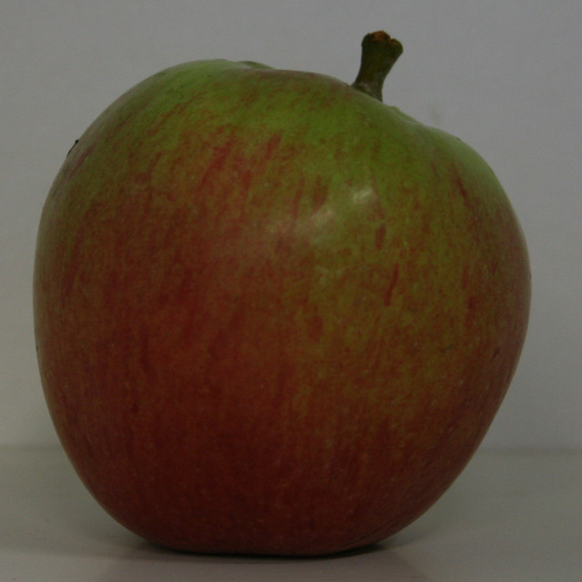 Æbletræ - Malus domestica 'Sweet Sixteen' - Dværg