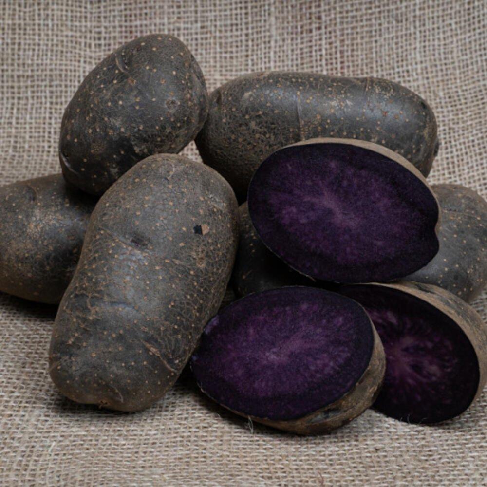 Læggekartofler - Purple Rain