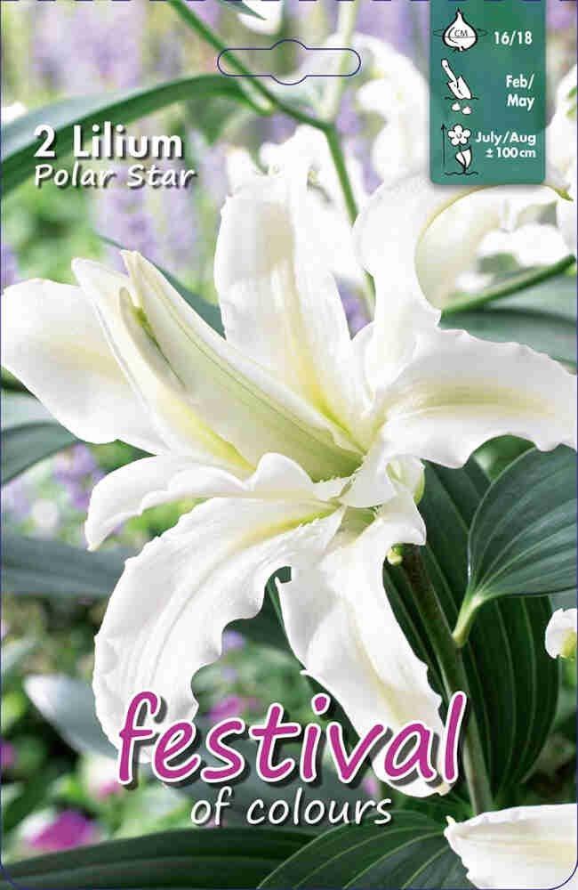 Orientalsk - Lilium Polar Star (x1) 16/18