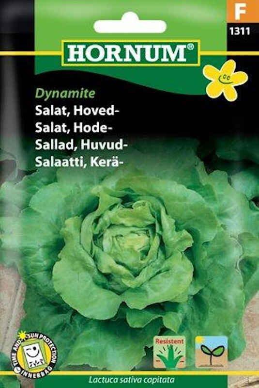 Salatfrø - Hoved - Dynamite
