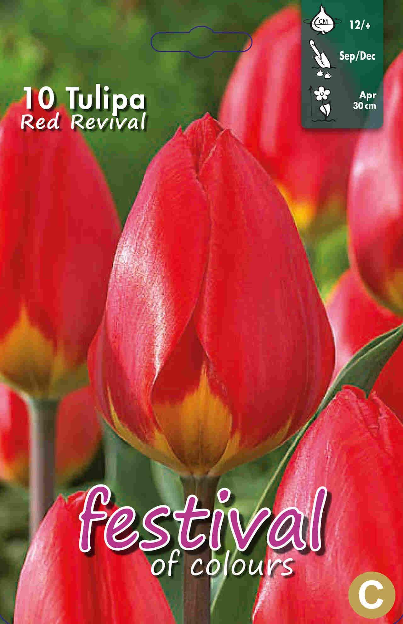 Tulipanløg - Tulipa Red Revival 12/+