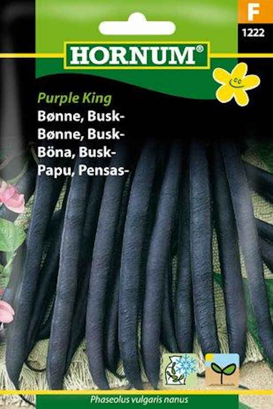 Bønnefrø - Buskbønne - Purple King