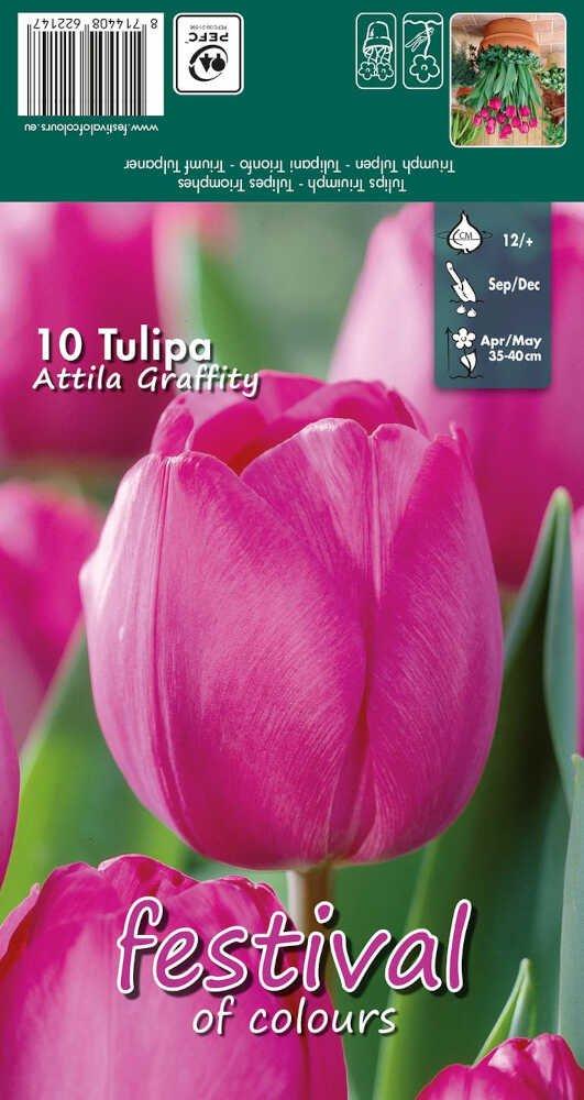 Tulips Attila Graffity 12/+