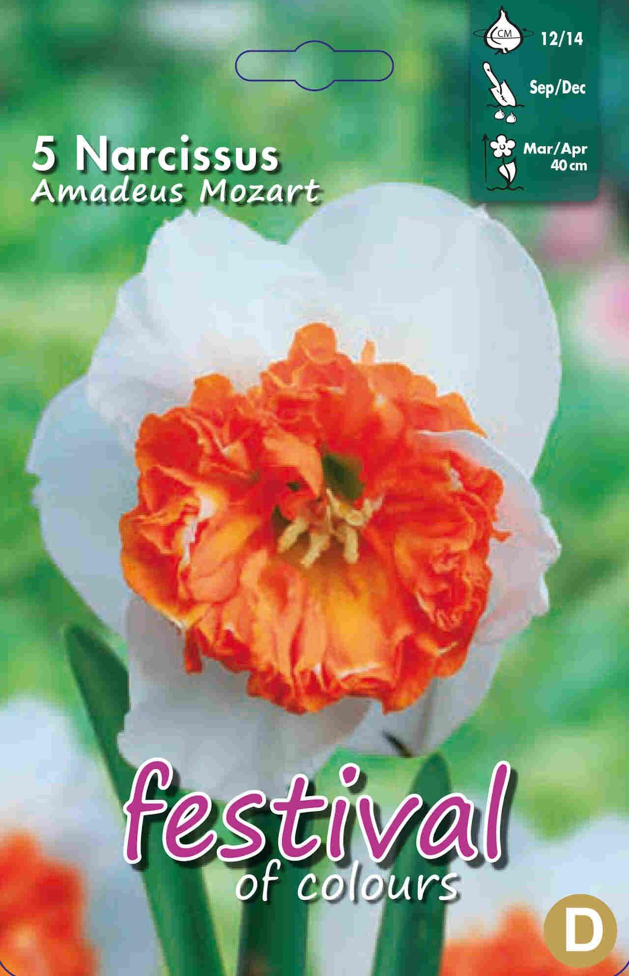 Påskeliljeløg - Narcissus Amadeus Mozart 12/14