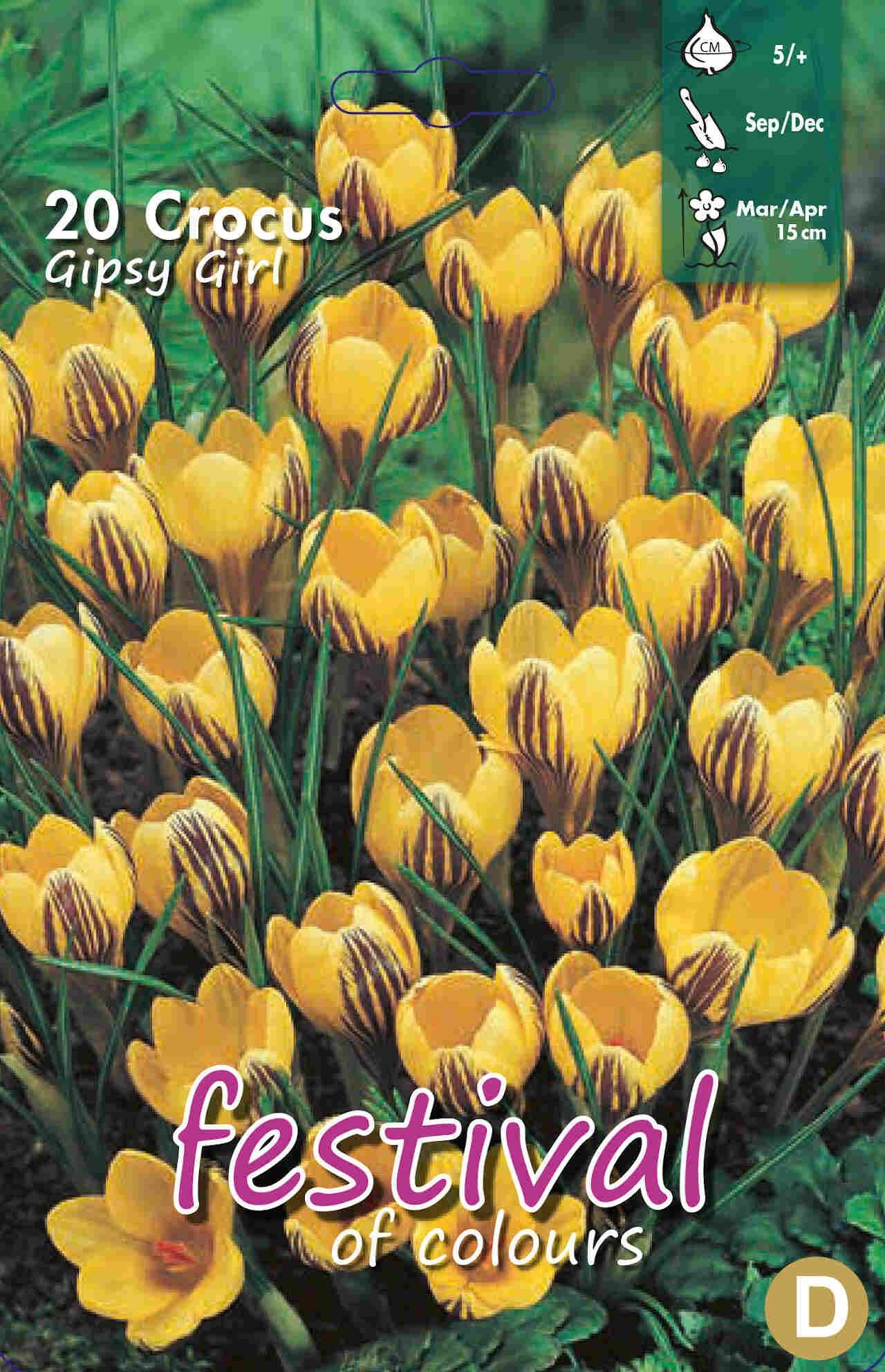 Krokus - Crocus Gipsy Girl 5/+