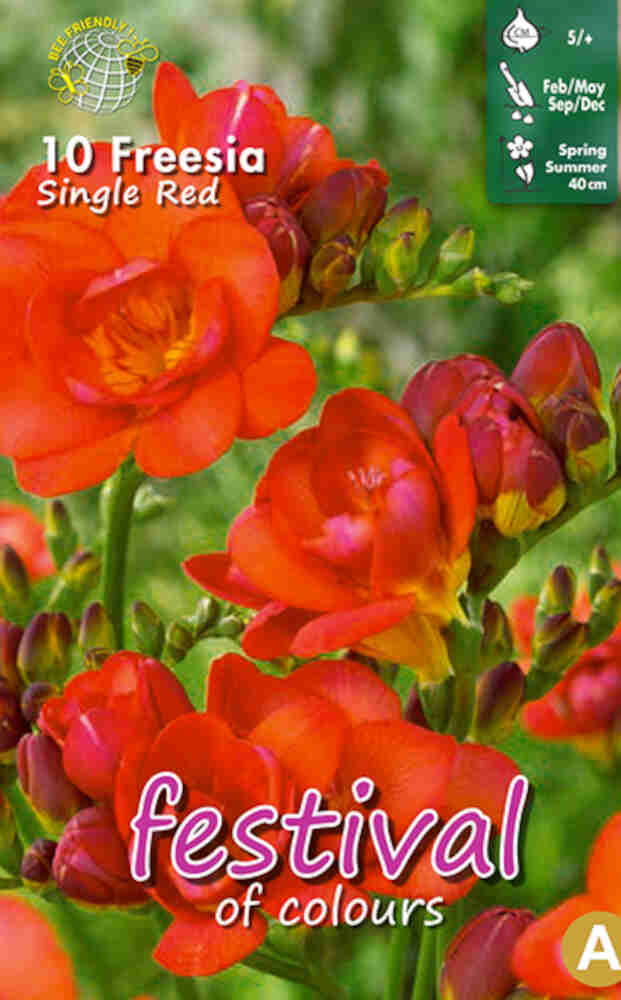 Fresia - Freesia 'Red Single' 5/+