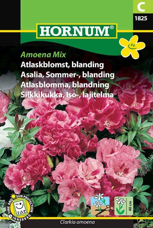 Atlaskblomst frø - blading. - Amoena Mix