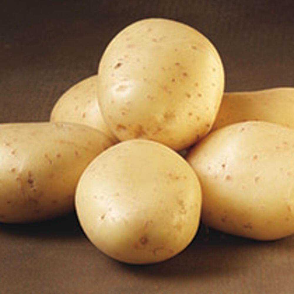 Smukke jutlandia læggekartofler